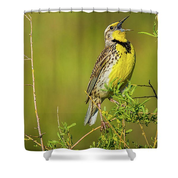 Shower Curtain featuring the photograph Sing A New Song by John De Bord