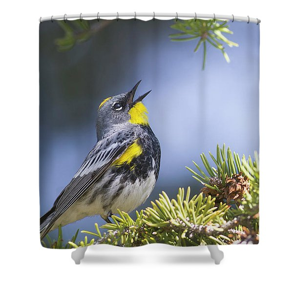 Singing Audubon's Warbler Shower Curtain
