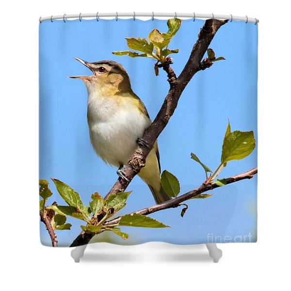Singing Red-eyed Vireo Shower Curtain