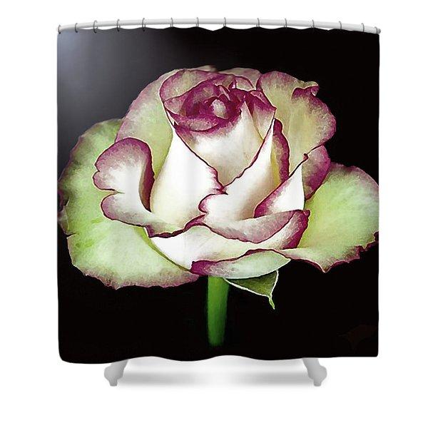 Single Beautiful Rose Shower Curtain