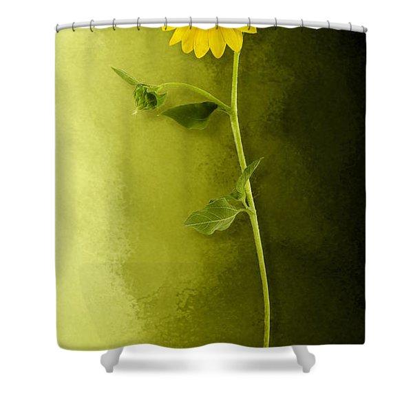 Single Long Stem Sunflower Shower Curtain
