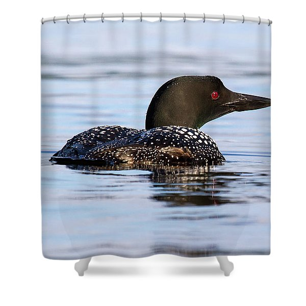 Single Loon Shower Curtain