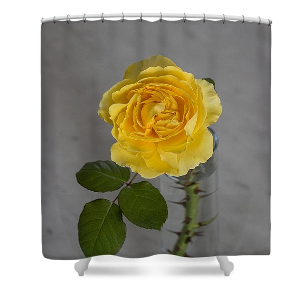 Single Yellow Rose With Thorns Shower Curtain