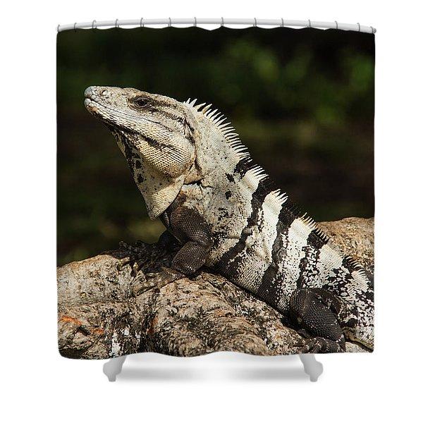 Sir Iguana Mexican Art By Kaylyn Franks Shower Curtain