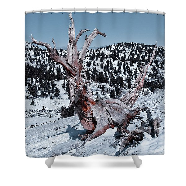 Shower Curtain featuring the photograph Skating Pine by Mae Wertz
