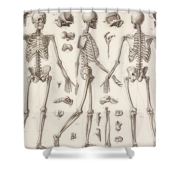 Skeletons Shower Curtain