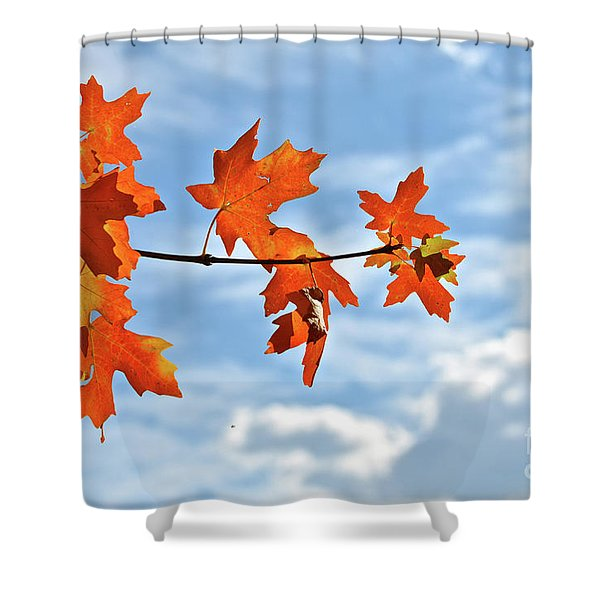 Sky View With Autumn Maple Leaves Shower Curtain