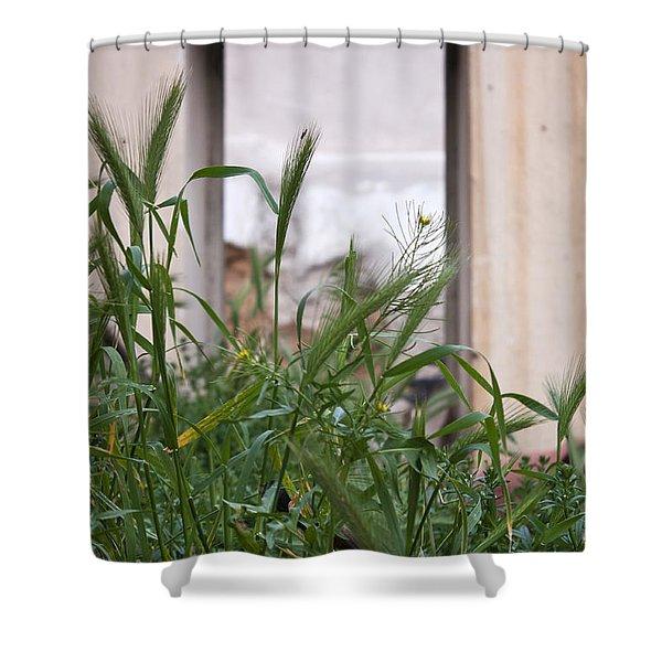 Sky Window Shower Curtain