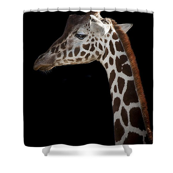 Sleek Shower Curtain