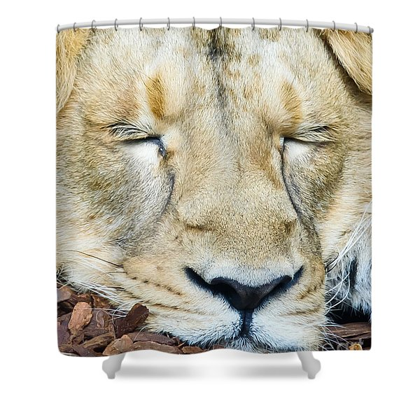 Sleeping Lion Shower Curtain