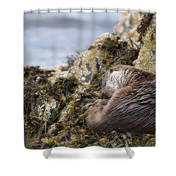 Sleeping Otter Shower Curtain