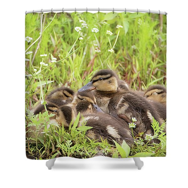 Sleepy Ducklings Shower Curtain
