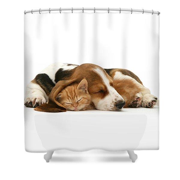Sleepy Ginger Pals Shower Curtain