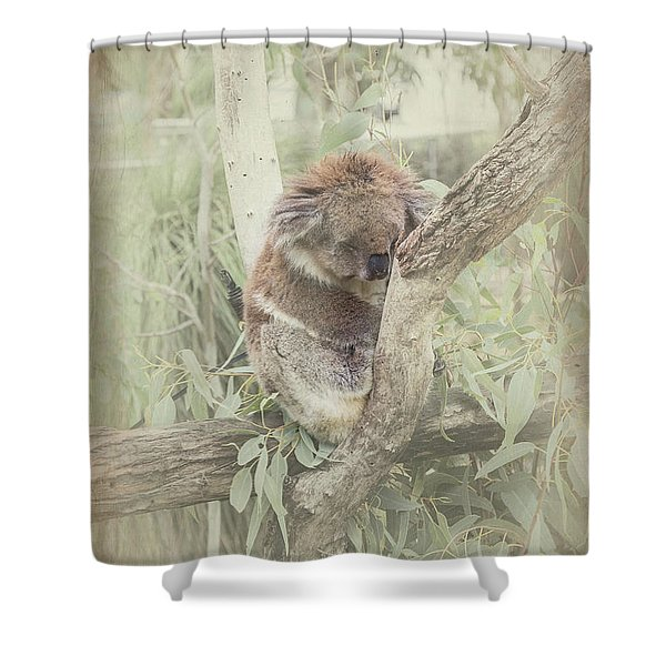 Sleepy Koala Shower Curtain