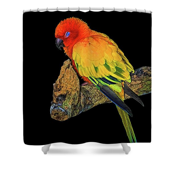 Sleepy Sun Conure Shower Curtain