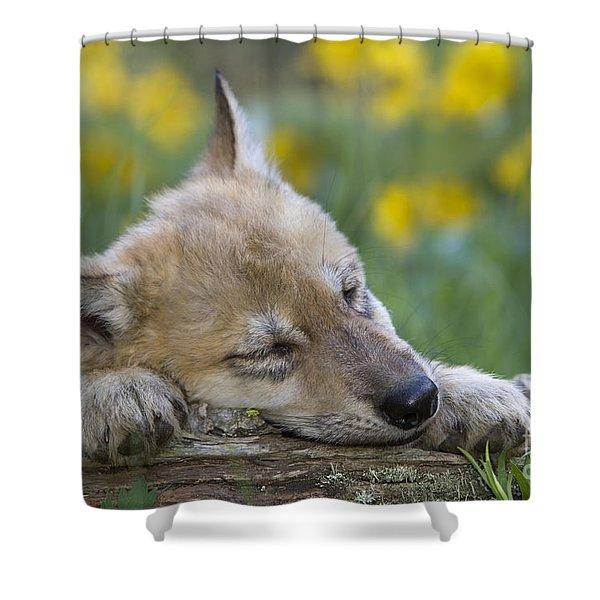 Sleepy Wolf Cub Shower Curtain