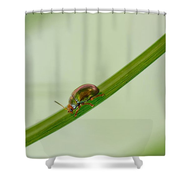 Slippery Dip Shower Curtain