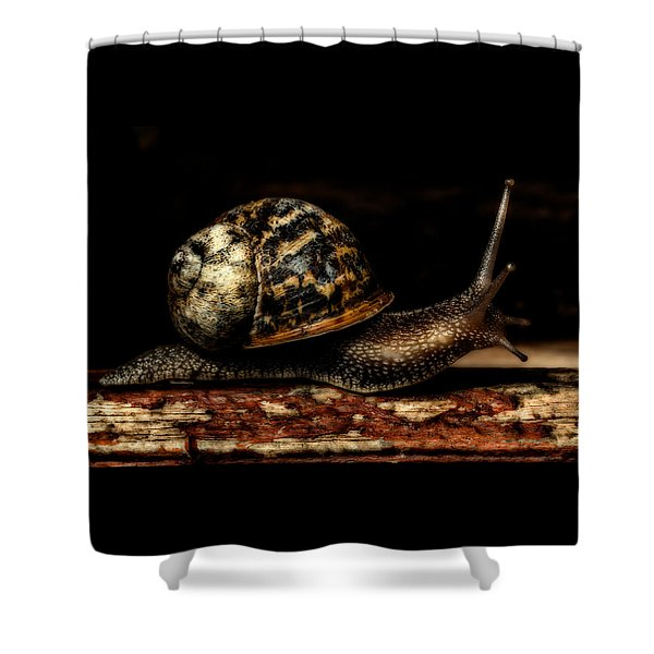 Shower Curtain featuring the photograph Slow Mover by Nick Bywater