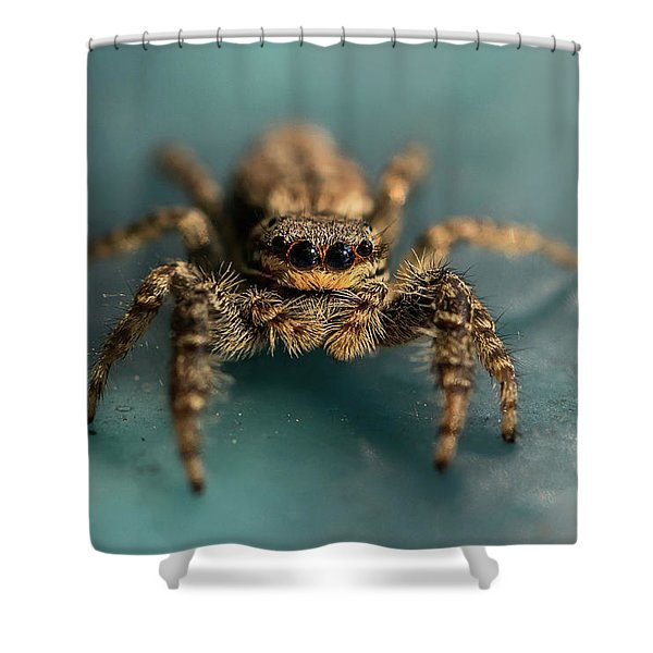 Shower Curtain featuring the photograph Small Jumping Spider by Jaroslaw Blaminsky