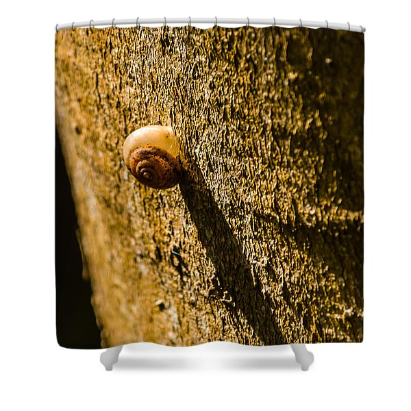 Small Snail On The Tree Shower Curtain