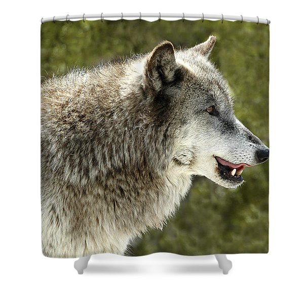 Smiling Wolf Shower Curtain
