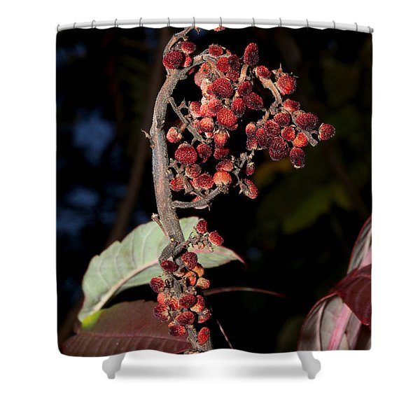 Smooth Sumac Flower Shower Curtain