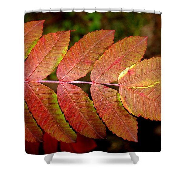 Smooth Sumac Shower Curtain