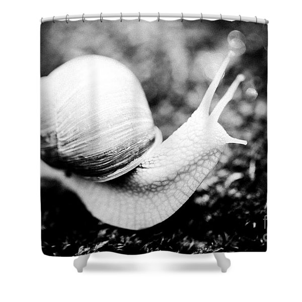 Shower Curtain featuring the photograph Snail Crawling On The Stone Artmif by Raimond Klavins