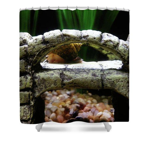 Snail Over A Bridge Shower Curtain
