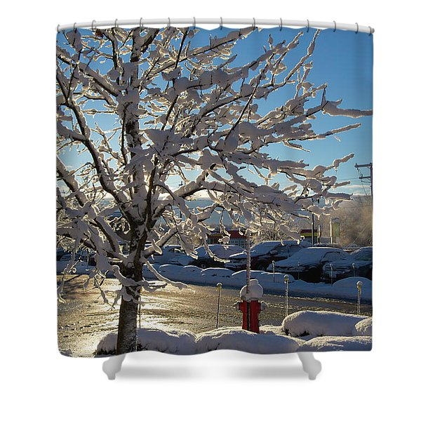 Snow-coated Tree Shower Curtain