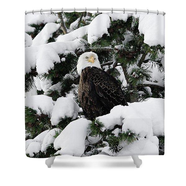 Snow Eagle Shower Curtain