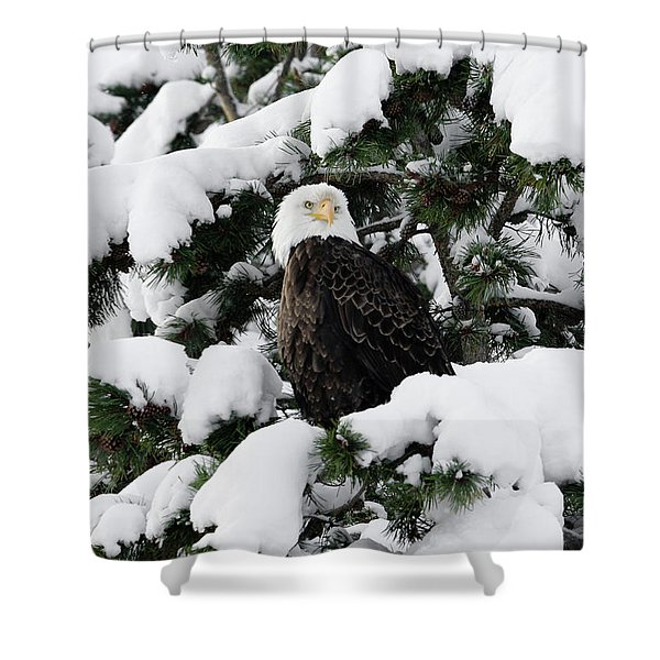 Shower Curtain featuring the photograph Snow Eagle by Ronnie and Frances Howard