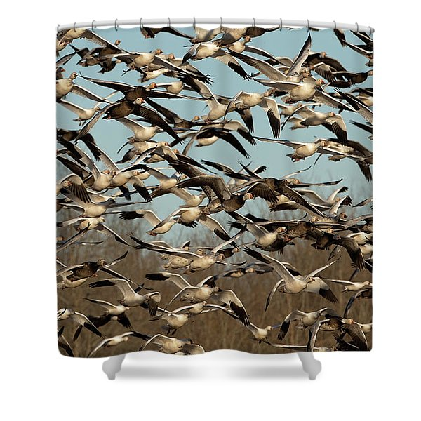Snow Geese Shower Curtain