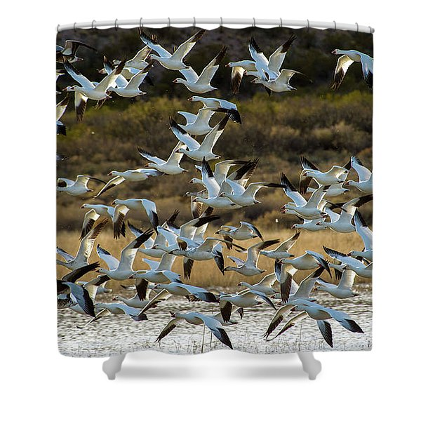 Snow Geese Flock In Flight Shower Curtain