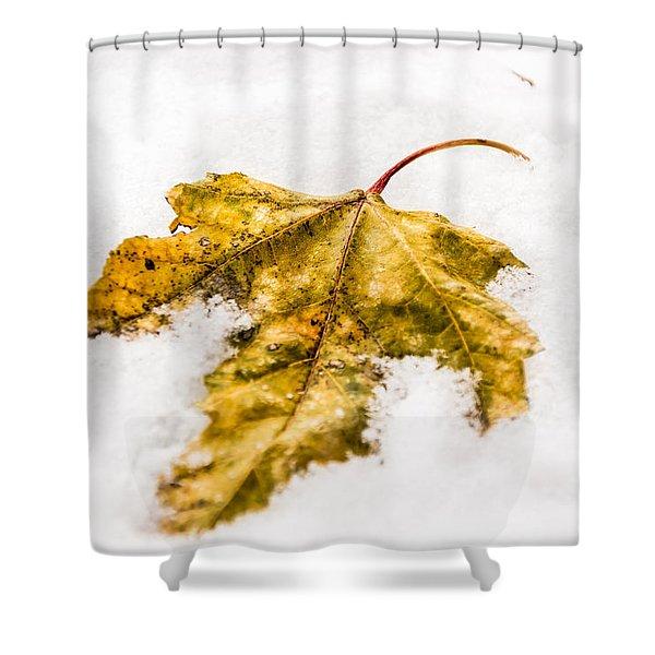 Snow Leaf Shower Curtain