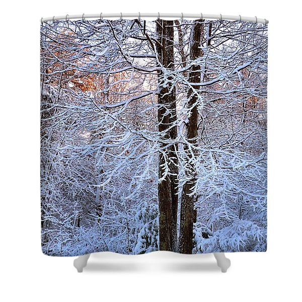 Snow Maple Morning Shower Curtain