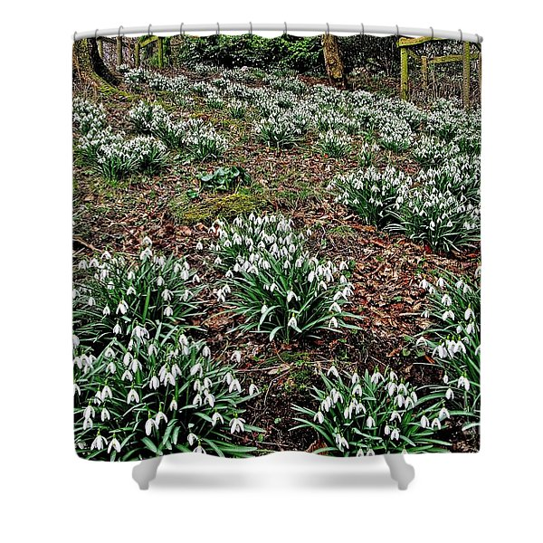 Snowdrops In Spring Woodland Shower Curtain