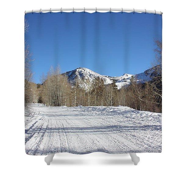 Snowy Aspen Shower Curtain
