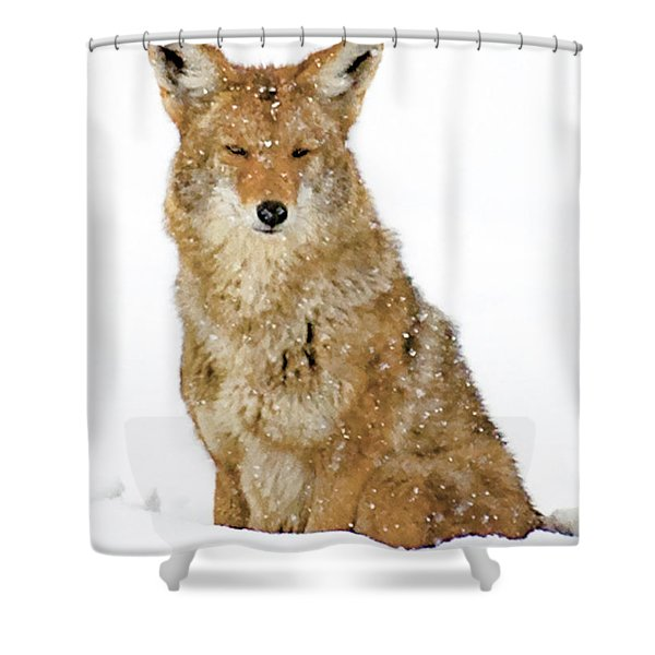Snowy Coyote Shower Curtain