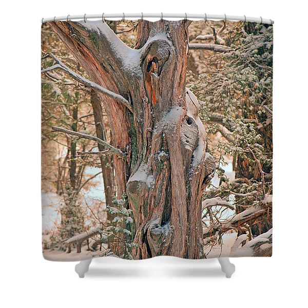 Snowy Dead Tree Shower Curtain