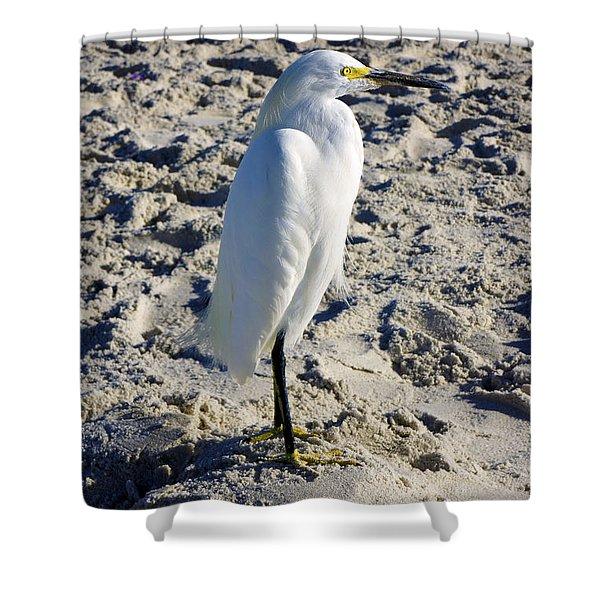 Snowy Egret At Naples, Fl Beach Shower Curtain