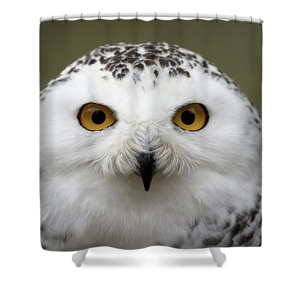 Snowy Eyes Shower Curtain