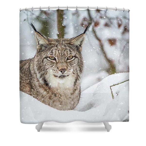 Snowy Lynx Shower Curtain