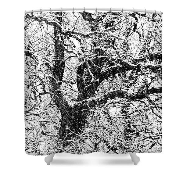 Snowy Oak Shower Curtain