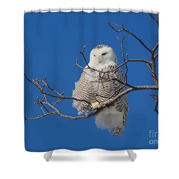 Snowy Owl 7 Shower Curtain