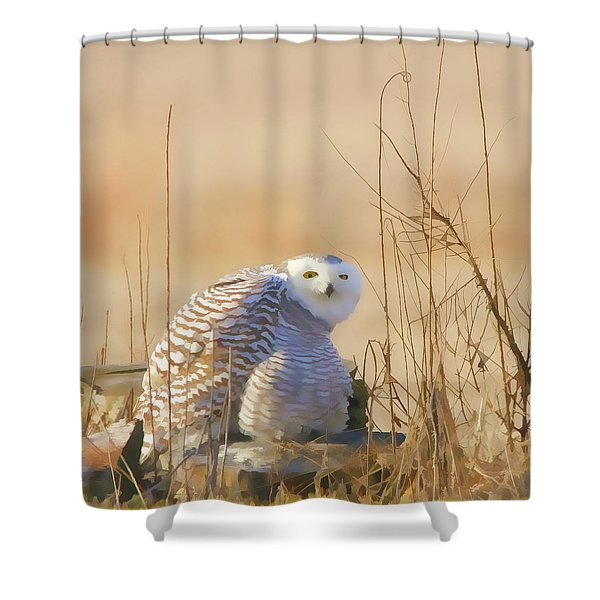 Snowy Owl In Field Shower Curtain