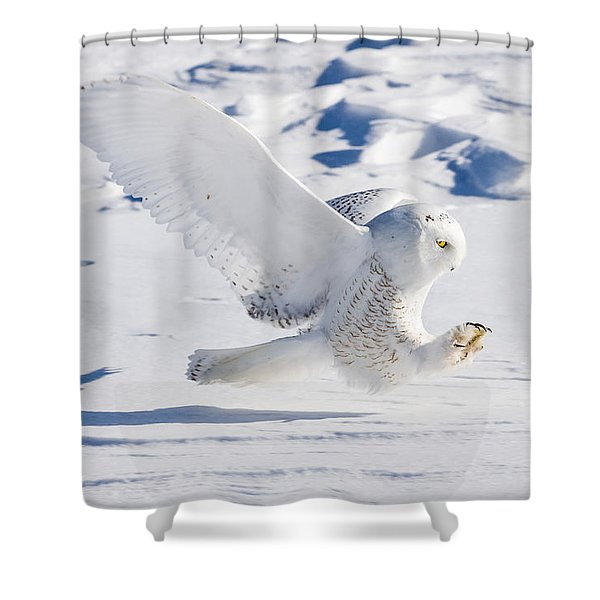 Snowy Owl Pouncing Shower Curtain