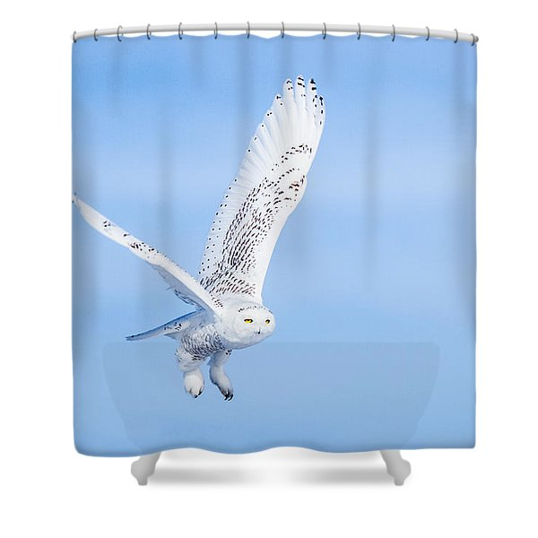 Snowy Owls Soaring Shower Curtain