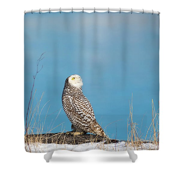 Snowy Watching A Plane Shower Curtain
