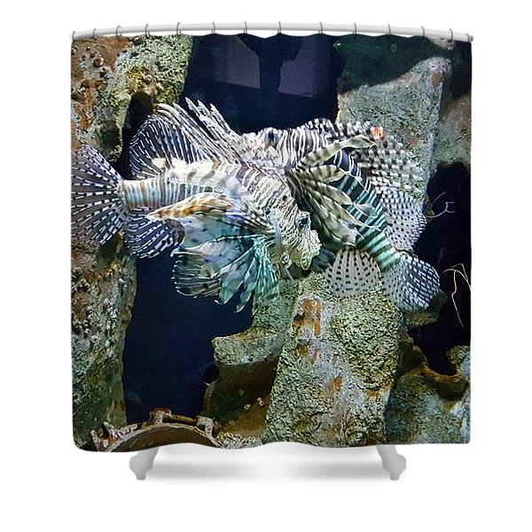 Socializing Fish Shower Curtain